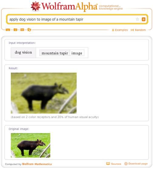 apply dog vision to image of a mountain tapir