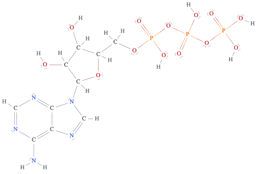 Lewis structure of ATP