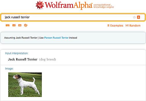 Jack Russell Terrier in Wolfram|Alpha