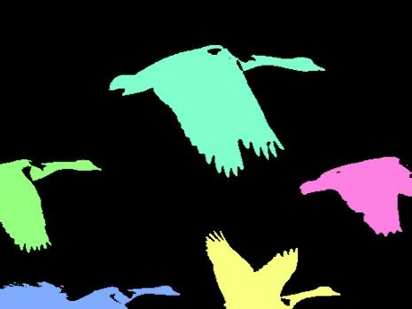 Colored geese—click to view movie