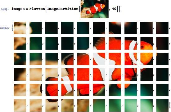 Fish image broken into 40-pixel squares