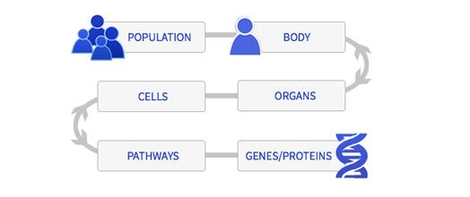Population to genes/proteins model