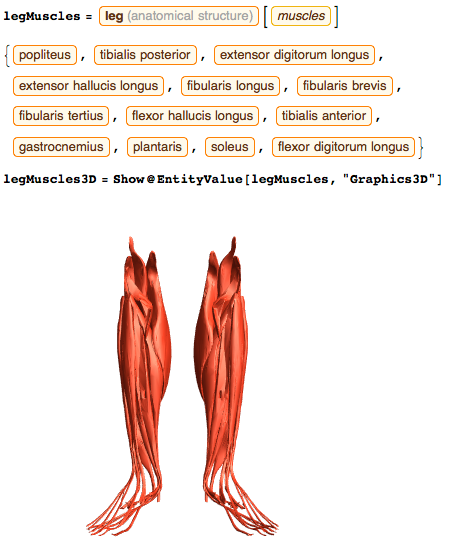 List of muscles that are part of the leg