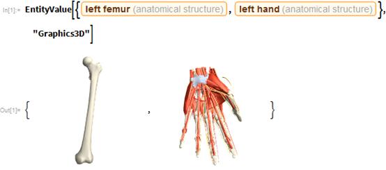 "EntityValue[{Entity[""AnatomicalStructure"", ""LeftFemur""],    Entity[""AnatomicalStructure"", ""LeftHand""]}, ""Graphics3D""]"