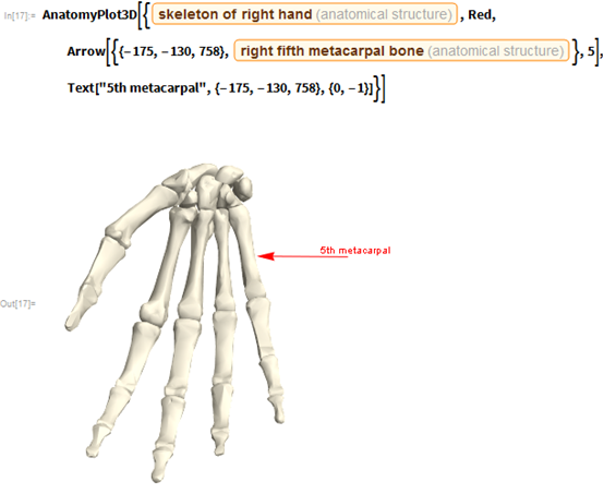 "AnatomyPlot3D[{Entity[""AnatomicalStructure"", ""SkeletonOfRightHand""],    Red, Arrow[{{-175, -130, 758},      Entity[""AnatomicalStructure"", ""RightFifthMetacarpalBone""]}, 5],    Text[""5th metacarpal"", {-175, -130, 758}, {0, -1}]}]"