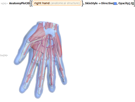 """AnatomyPlot3D[{Entity[""""AnatomicalStructure"""", """"RightHand""""]},   SkinStyle -> Directive[RGBColor[0.39, 0.58, 1], Opacity[.3]]]"""