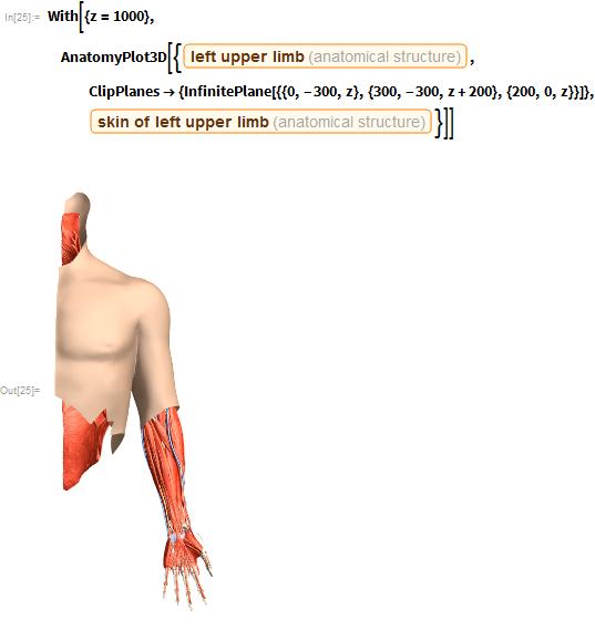 "With[{z = 1000},   AnatomyPlot3D[{Entity[""AnatomicalStructure"", ""LeftUpperLimb""],     ClipPlanes -> {InfinitePlane[{{0, -300, z}, {300, -300,          z + 200}, {200, 0, z}}]},     Entity[""AnatomicalStructure"", ""SkinOfLeftUpperLimb""]}]]"
