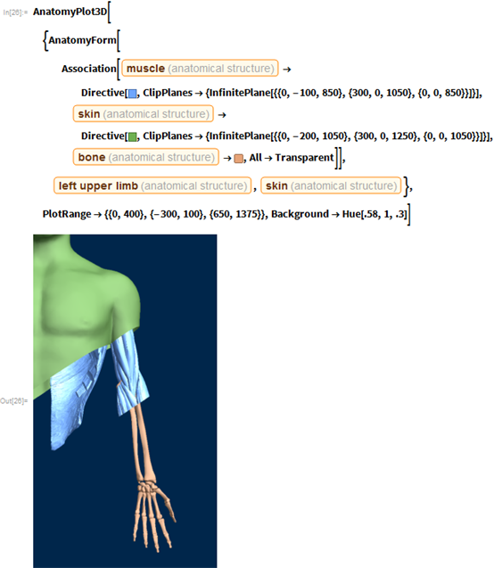 "AnatomyPlot3D[{AnatomyForm[    Association[     Entity[""AnatomicalStructure"", ""Muscle""] ->       Directive[RGBColor[0.43, 0.65, 1],        ClipPlanes -> {InfinitePlane[{{0, -100, 850}, {300, 0,             1050}, {0, 0, 850}}]}],      Entity[""AnatomicalStructure"", ""Skin""] ->       Directive[RGBColor[0.43, 0.6900000000000001, 0.32],        ClipPlanes -> {InfinitePlane[{{0, -200, 1050}, {300, 0,             1250}, {0, 0, 1050}}]}],      Entity[""AnatomicalStructure"", ""SetOfBones""] -> RGBColor[      0.9, 0.64, 0.47000000000000003`], All -> Transparent]],    Entity[""AnatomicalStructure"", ""LeftUpperLimb""],    Entity[""AnatomicalStructure"", ""Skin""]},   PlotRange -> {{0, 400}, {-300, 100}, {650, 1375}},   Background -> Hue[.58, 1, .3]]"