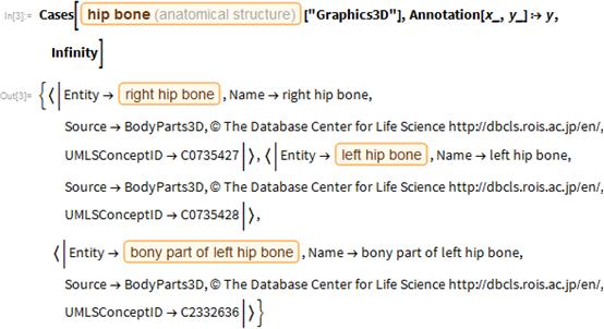 Hip Bone and Structure Below