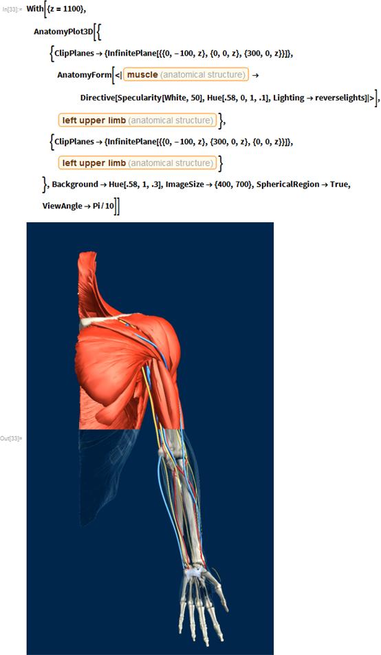 "With[{z = 1100},  AnatomyPlot3D[{    {ClipPlanes -> {InfinitePlane[{{0, -100, z}, {0, 0, z}, {300, 0,           z}}]}, AnatomyForm[<|       Entity[""AnatomicalStructure"", ""Muscle""] ->         Directive[Specularity[White, 50], Hue[.58, 0, 1, .1],          Lighting -> reverselights]|>],      Entity[""AnatomicalStructure"", ""LeftUpperLimb""]},    {ClipPlanes -> {InfinitePlane[{{0, -100, z}, {300, 0, z}, {0, 0,           z}}]}, Entity[""AnatomicalStructure"", ""LeftUpperLimb""]}    }, Background -> Hue[.58, 1, .3], ImageSize -> {400, 700},    SphericalRegion -> True, ViewAngle -> Pi/10]]"