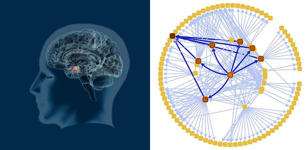 Brain image and brain flow graph