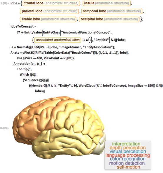 Cerebral lobe cortical map