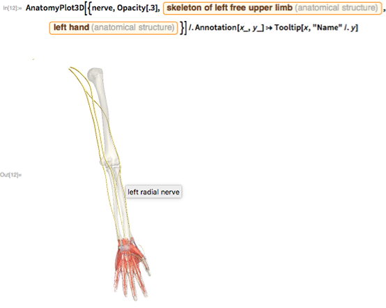 "AnatomyPlot3D[{nerve, Opacity[.3], Entity[""AnatomicalStructure"", ""SkeletonOfLeftFreeUpperLimb""], Entity[""AnatomicalStructure"", ""LeftHand""]}] /. Annotation[x_, y_] :> Tooltip[x, ""Name"" /. y]"