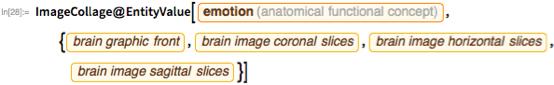 """ImageCollage@  EntityValue[   Entity[""""AnatomicalFunctionalConcept"""",     """"Emotion""""], {EntityProperty[""""AnatomicalFunctionalConcept"""",      """"BrainGraphicFront""""],     EntityProperty[""""AnatomicalFunctionalConcept"""",      """"BrainImageCoronalSlices""""],     EntityProperty[""""AnatomicalFunctionalConcept"""",      """"BrainImageHorizontalSlices""""],     EntityProperty[""""AnatomicalFunctionalConcept"""",      """"BrainImageSagittalSlices""""]}]"""