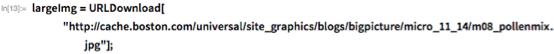 "largeImg = URLDownload[    ""http://cache.boston.com/universal/site_graphics/blogs/bigpicture/\ micro_11_14/m08_pollenmix.jpg""];"