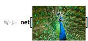 Peacock Input