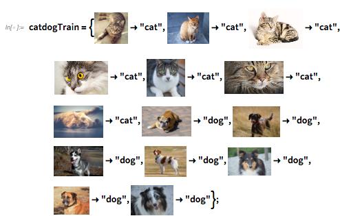 catdogTrain
