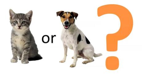Cat or dog?