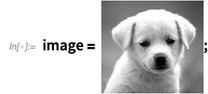 image = puppy