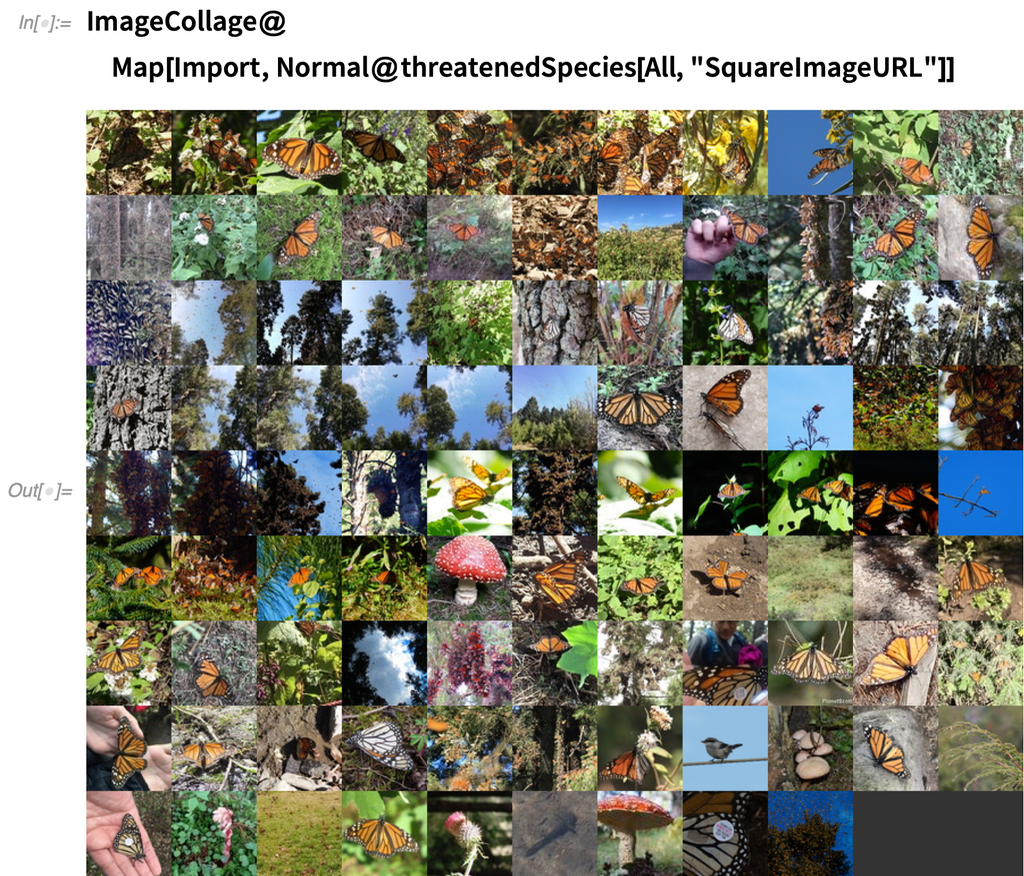 ImageCollage@Map