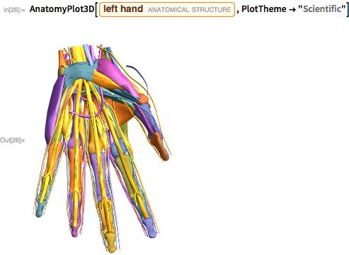 "AnatomyPlot3D[Entity[""AnatomicalStructure"", ""LeftHand""], PlotTheme -> ""Scientific""]"