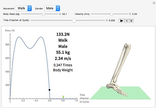 Biomechanics of Walking and Running
